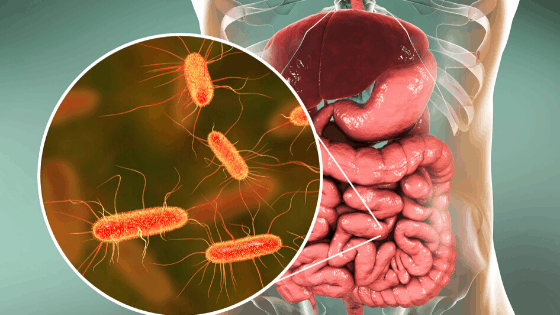 The Gut Microbiome: the Forgotten Organ?